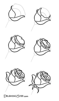 how to draw roses pencil drawing of a rose