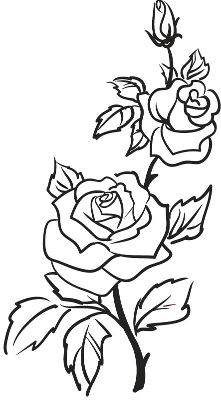 rose outline google search