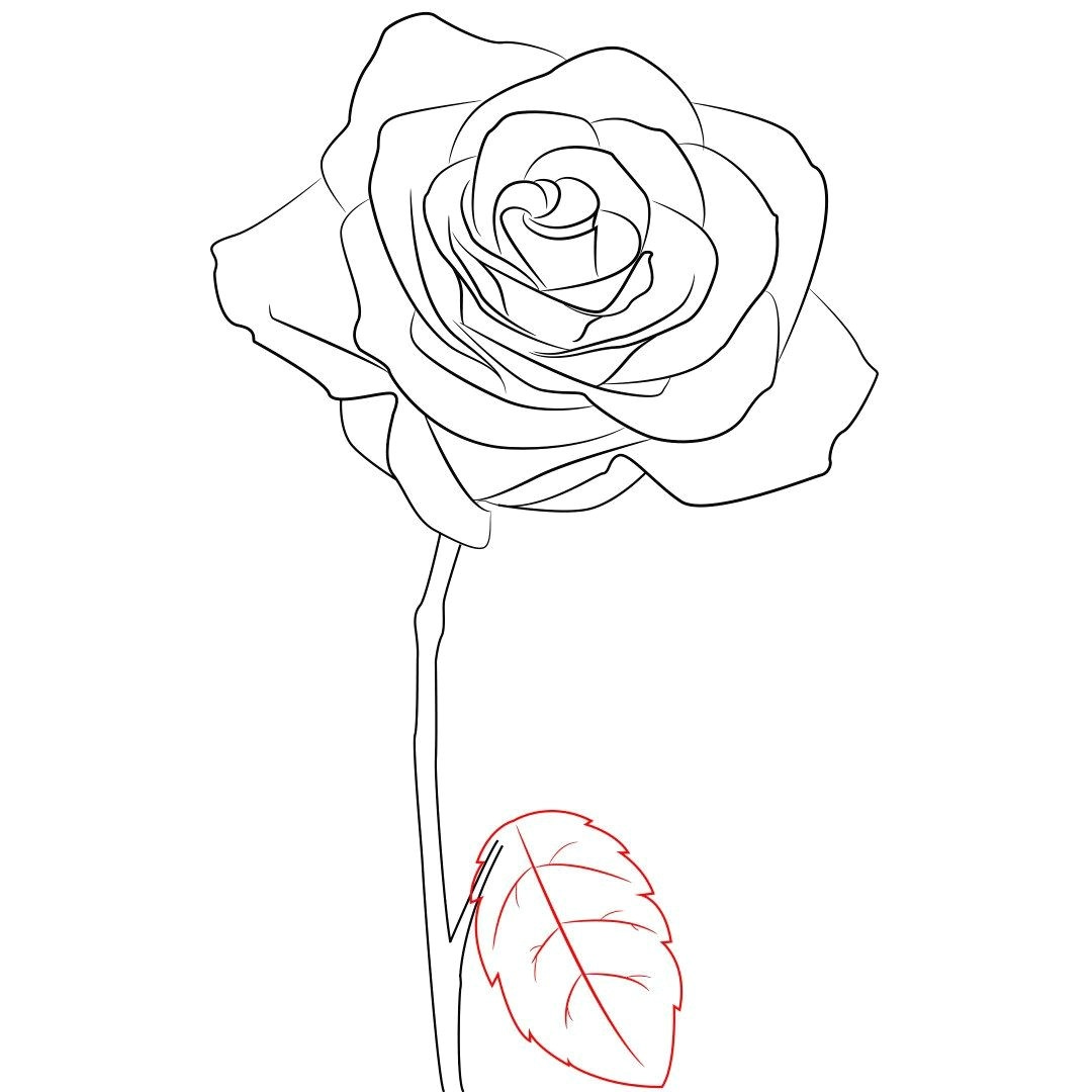 Draw A Rose Garden How to Draw A Rose Simple Step by Step Doodle All Day Every Day