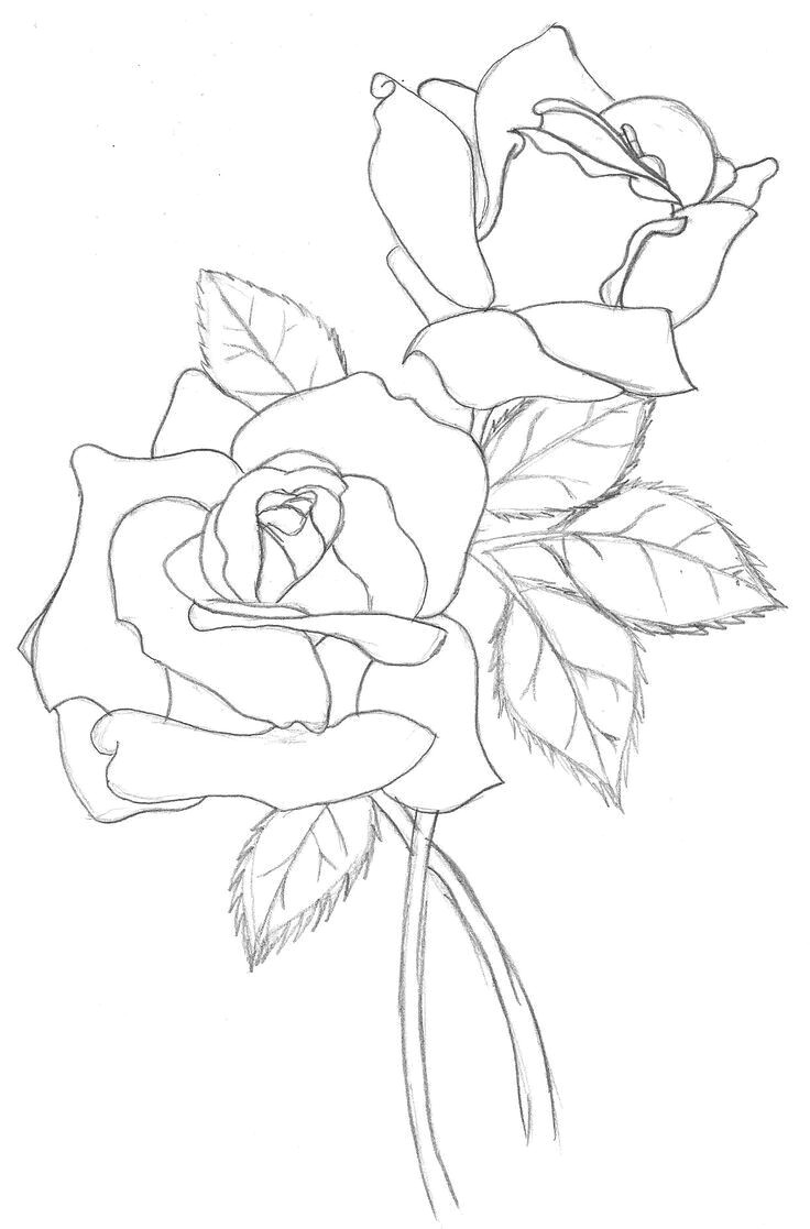 drawing a rose realistic