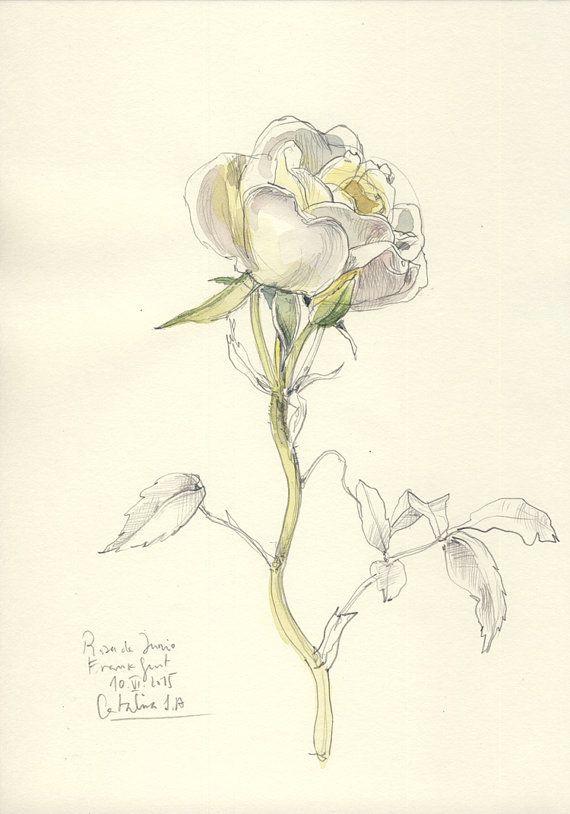 rose original drawing n 1 original watercolor and by catilustre dijn loves flowers pinterest watercolor originals and art flowers