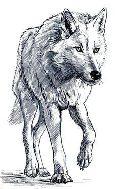 wolf bilder zeichnen malen und zeichnen tiere zeichnen expressionismus kohle wolf
