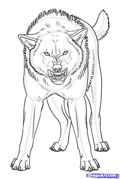 how to draw an angry wolf anime wolf drawing fox drawing