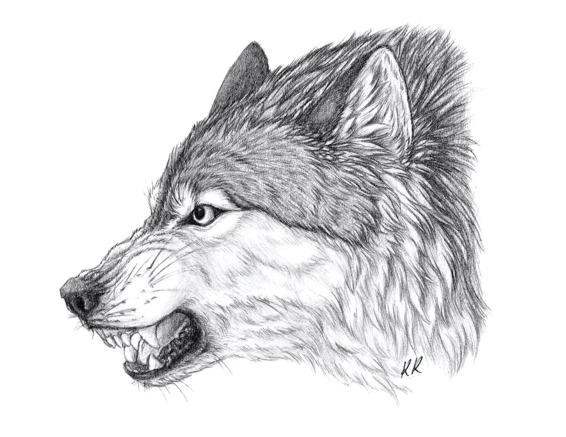 an angry wolf scar from my books art by kawzar of deviant art