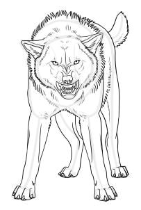 how to draw an angry wolf step 21 repinned by luis navas