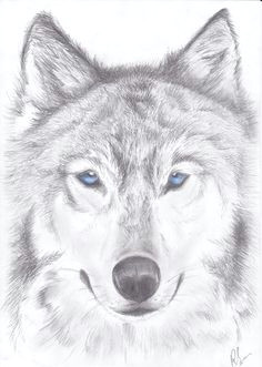 wolf picture love how light it is wolf drawing easy wolf head drawing