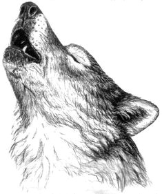 wolf drawing google search howling wolf tattoo wolf howling drawing animal drawings