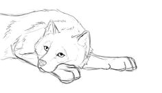sketches for wolf laying down sketch www sketchesxo com wolf drawing easy