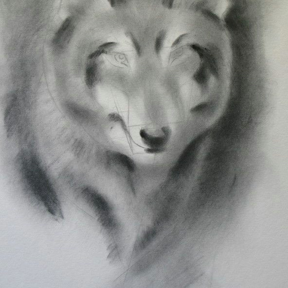 shading with powdered graphite wolf drawing
