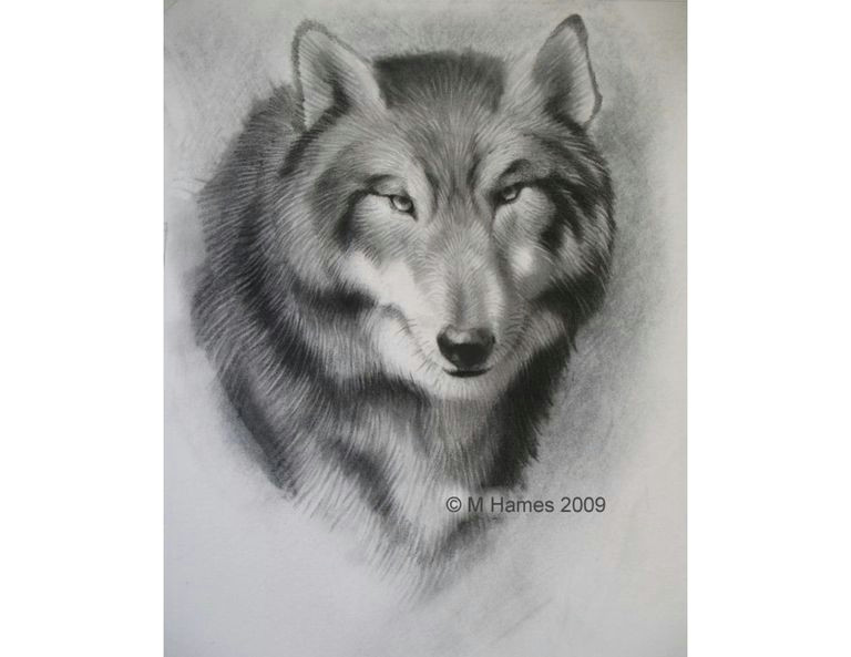 Draw Wolf Using Shapes A Step by Step Guide Of How to Draw A Wolf