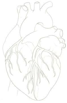 heart ideas human heart anatomic heart tattoo anatomical heart art human heart tattoo