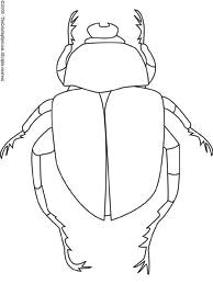 Drawing 9f Drawing Of Dung Beetle Clearly Shows Different Body Parts Study for