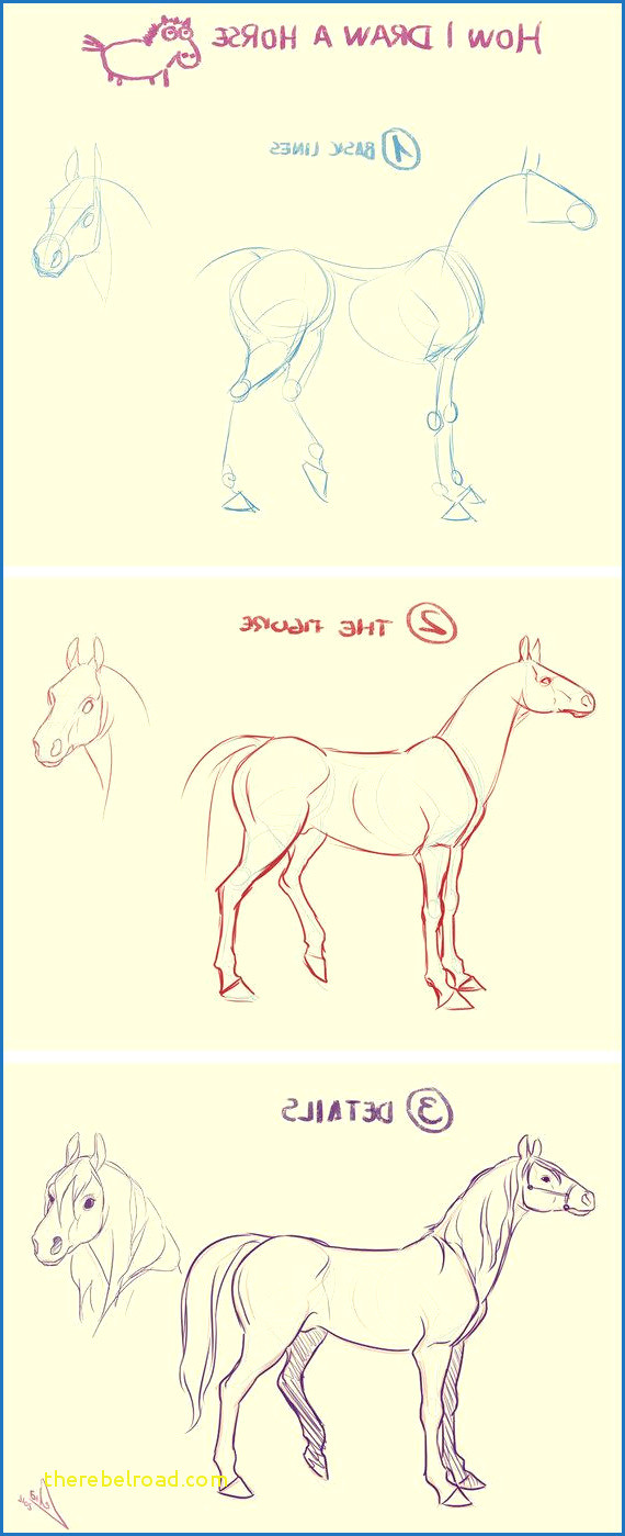 how i draw a horse by lelia deviantart collection how to draw a horse