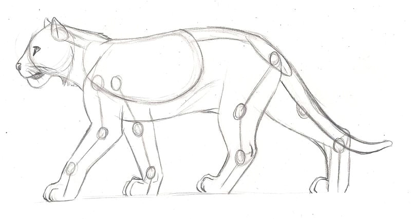 feline anatomy study tiger by axlrosie pinned 17 11 2014 chariot research
