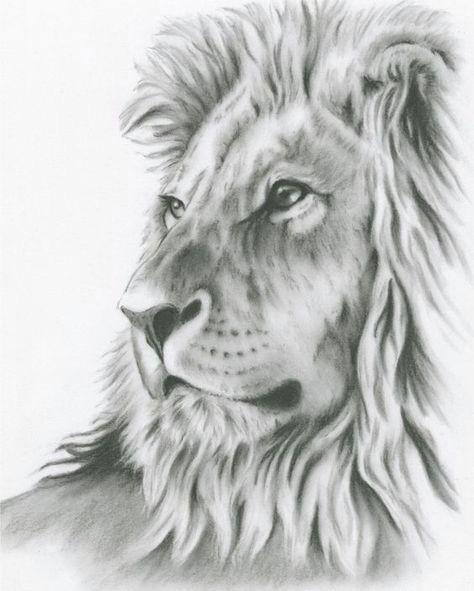 charcoal drawing 8 x10 original lion art lion drawing lion sketch charcoal lion charcoal sketch african cat art drawing pinterest bristol