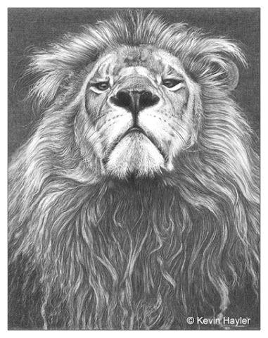 google animal tattoos body art tattoos tatoos lion head drawing roaring lion