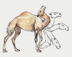 vitruvian camel dromedary camel animals desert art drawing