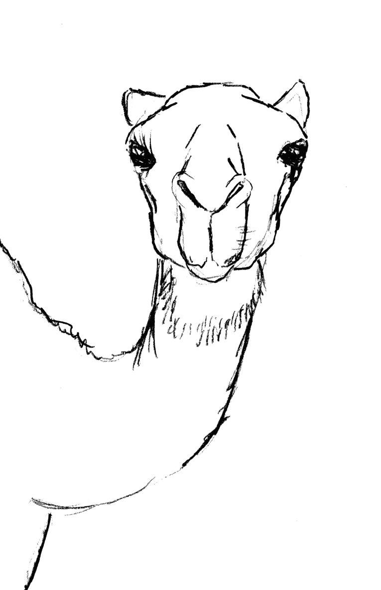 draw camel head
