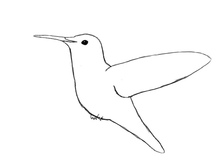 Drawing A Cartoon Hummingbird Simple Hummingbird Line Drawing Draw Your Hummingbird S Eye In Sun