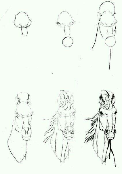 pysk konia od przodu