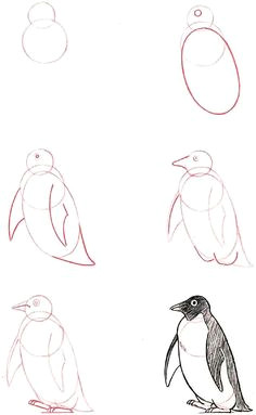 learn to draw penguin graphic illustration art tutorial