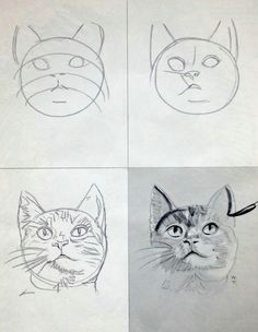 how to draw meow cat cat care for cats at catsincare com