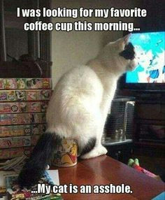 coffee cup morning coffee hate cats crazy cats silly cats funny