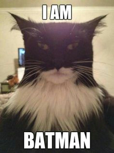 or is that catman batman fazer selfie batman cat real batman photo