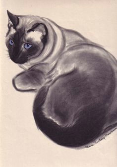 1944 matted large vintage cat print siamese cat by clare turlay newberry black and white blue eyes kitten feline home decor gift idea