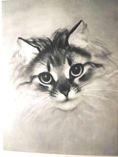 cat illustration cat drawing cat art print vintage cat print cats cat lover gift clare newberry