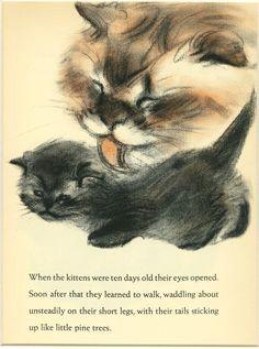 impresia n por clare turlay newberry 1937 c cat posters