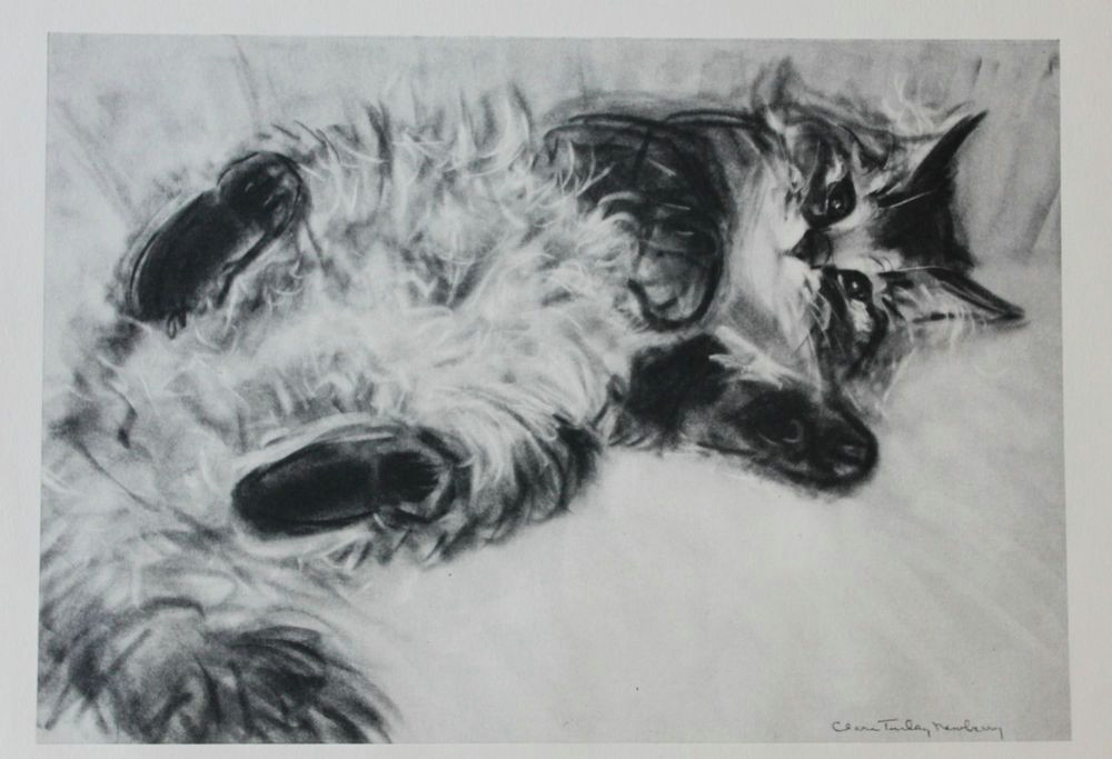 clare turlay newberry vintage original art print charcoal cat kitten mid century
