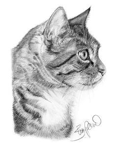 cat profile pencil drawing by wendy zumpano www pencilportraitcards com