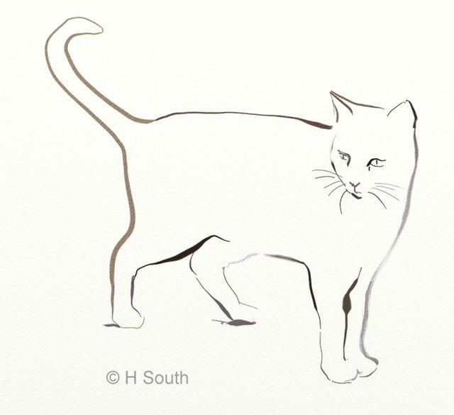 a cat sketched in digital ink h south licensed to about com inc based on a photograph by sem libeert