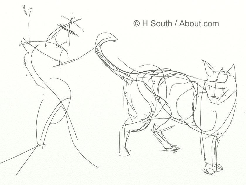sketching cats
