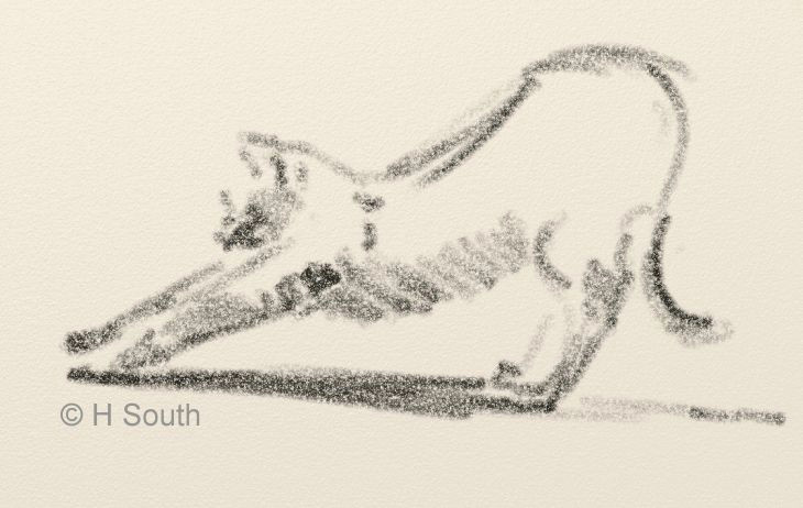 sketch of a cat stretching