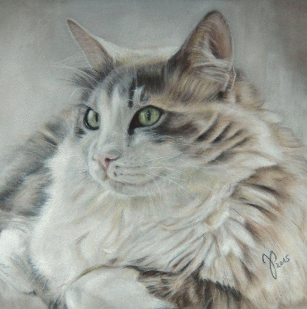 katzenportrait starsky zeichnung katze pastell cat portrait cat painting pastel jutta pallasch