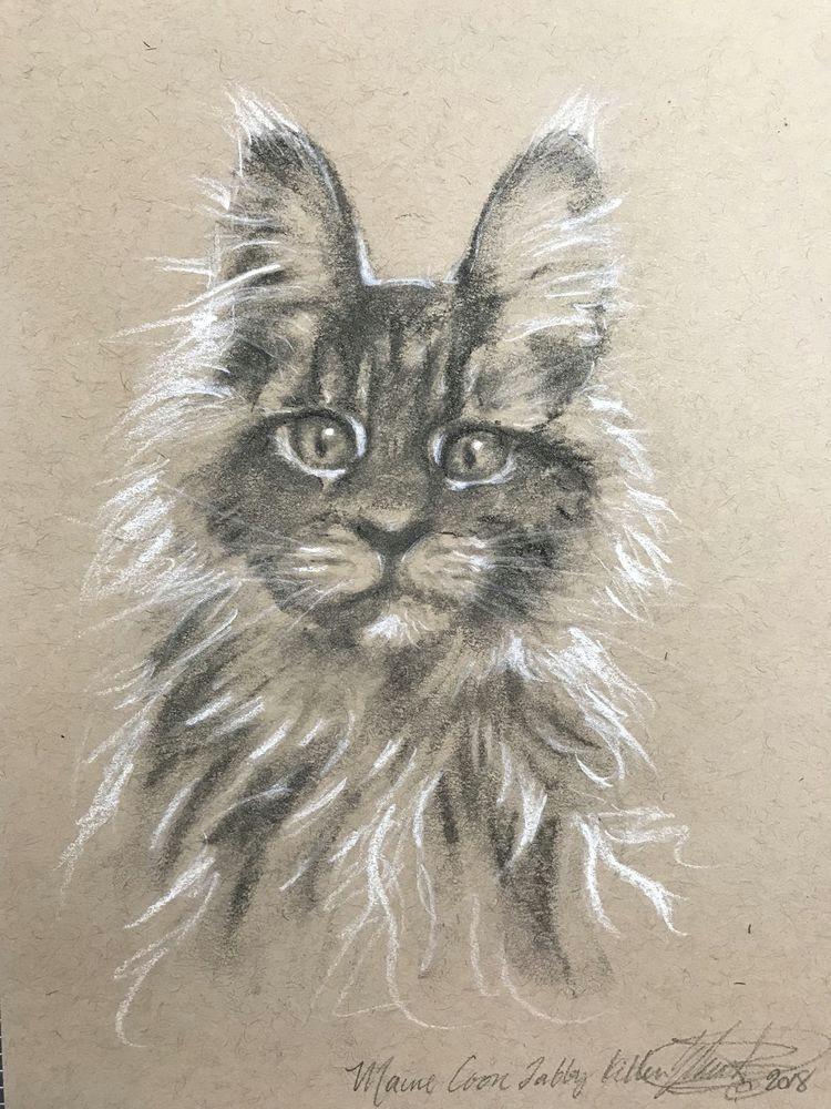 original charcoal drawing kitten maine coon cat pastel fine art american usa realism