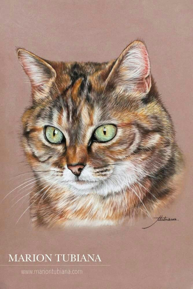 pastel drawing cat drawing pastel portraits pet portraits scratchboard art pastel