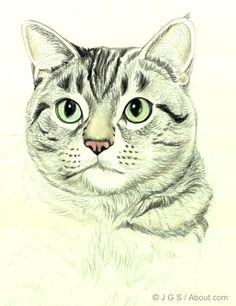 draw a majestic cat in colored pencil