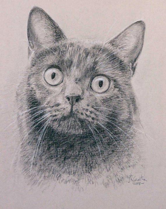 cat portrait pet portrait custom cat drawing carbon pencil on ingres paper lowest price is 5