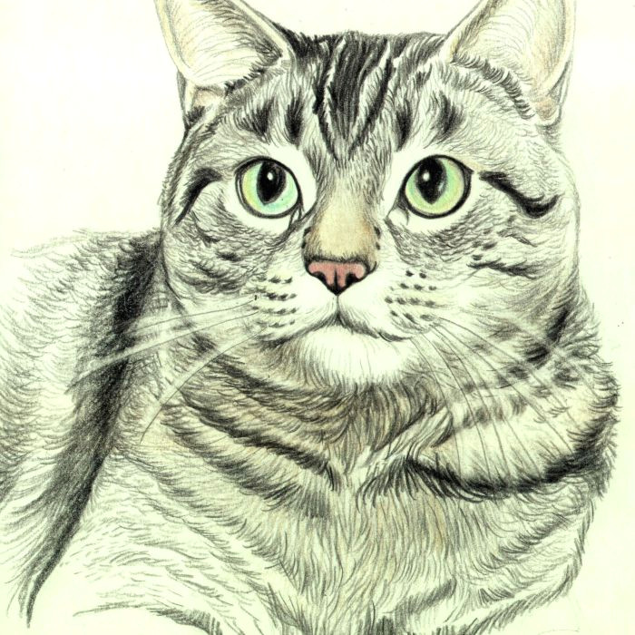 drawing the whiskers