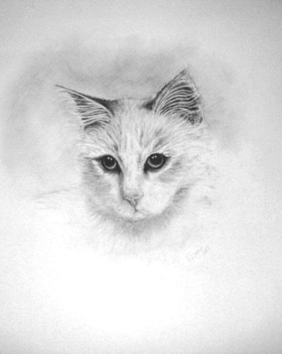 pencil drawing of long haired cat by littlesilverfingers on etsy a 35 00