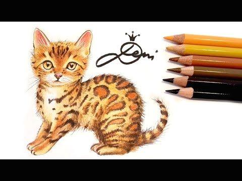 bengal katze zeichnen lernen mit buntstiften how to draw a bengal cat dod do n dµ n d n n d d d dµd d d d n dod dod n youtube