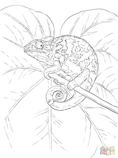 common chameleon super coloring blank coloring pages free printable coloring pages coloring books