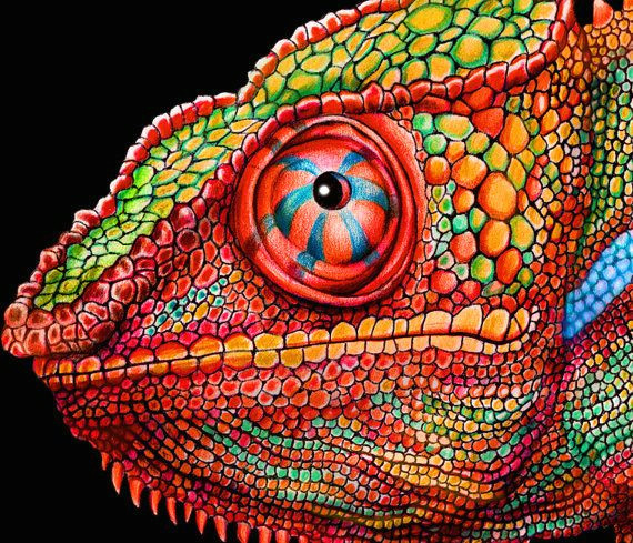 chameleon 3 colored pencil drawing signed by by timjeffsart