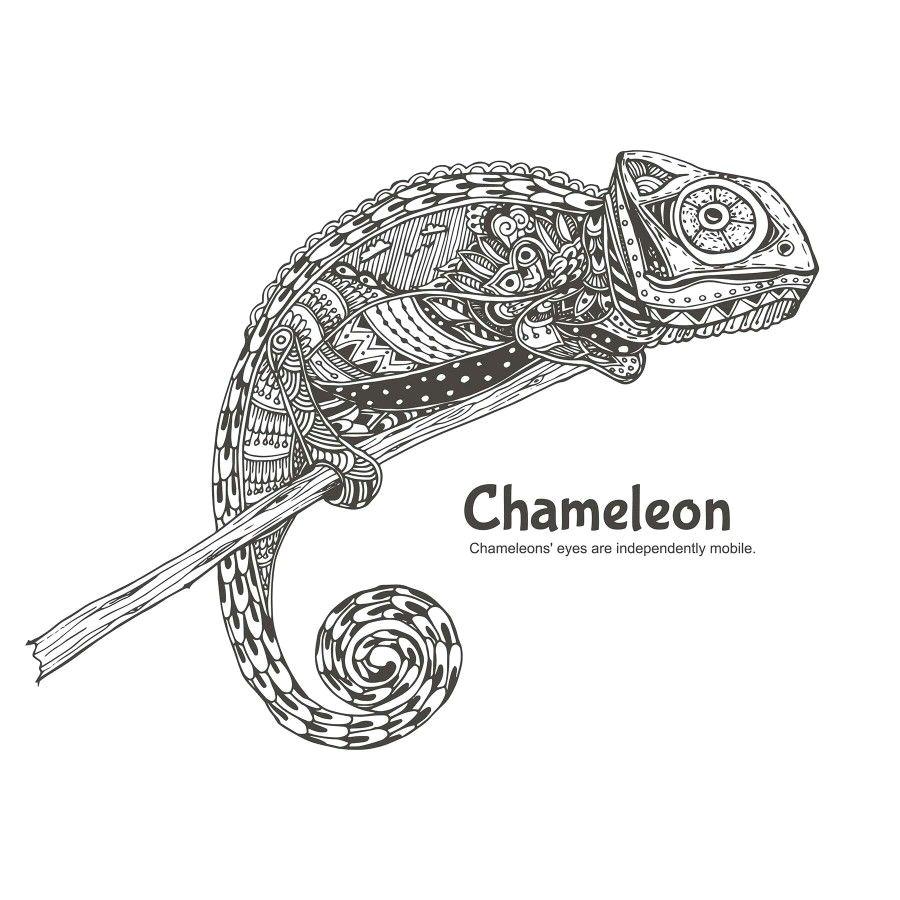 Drawing A Chameleon Eye Chameleon Doodling Pinterest Chameleons