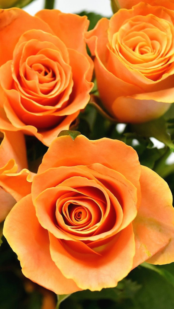 best of orange roses flowers bouquet 720a 1280 wallpaper of best of drawn vase 14h
