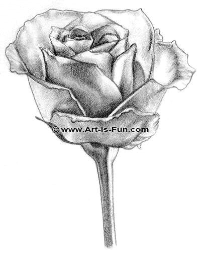 drawings of roses awesome closed rose drawing fresh s s media cache ak0 pinimg originals 89 0d