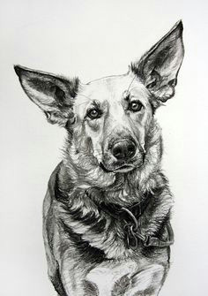 dog art by amy little ears 1 2013 charcoal on paper animal drawings